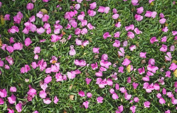 Картинка трава, цветы, фон, лепестки, grass, background, purple, petals, floral
