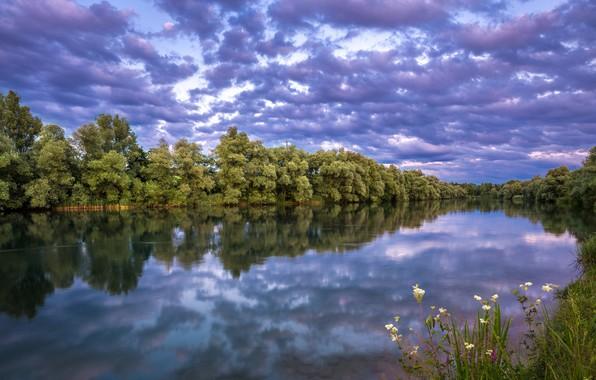 Картинка небо, трава, деревья, река, вечер