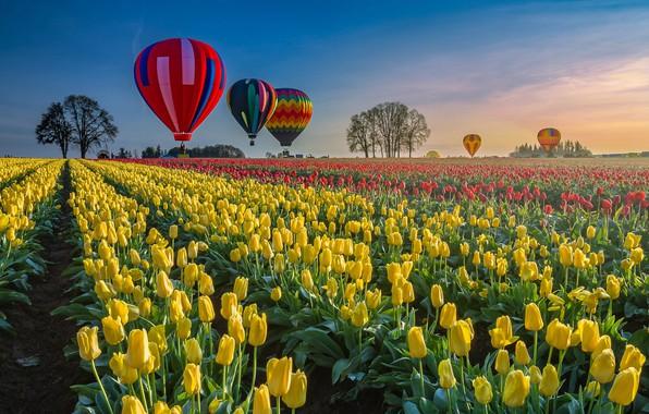 Картинка воздушный шар, воздушные шары, поля, Весна, тюльпаны