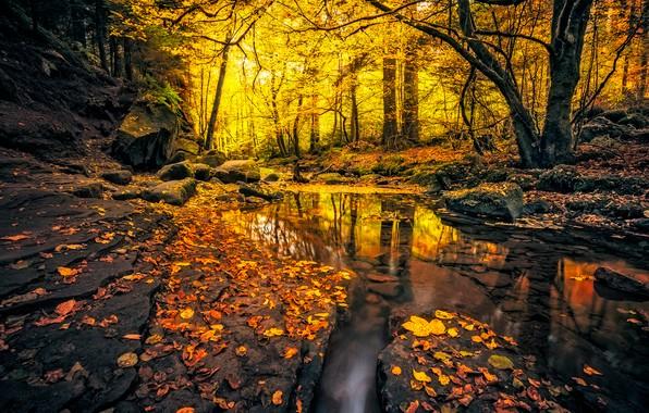 Картинка осень, лес, листья, свет, деревья, ветки, природа, пруд, парк, отражение, ручей, камни, скалы, ветви, стволы, …