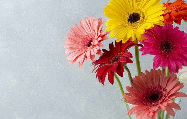 Картинка цветы, букет, герберы, flowers