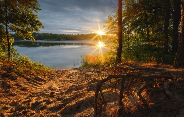 Картинка песок, лес, солнце, лучи, деревья, пейзаж, природа, отражение, берег, водоём, карьер, Оборотов Алексей