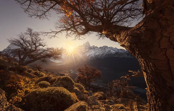Картинка солнце, лучи, деревья, горы, рассвет