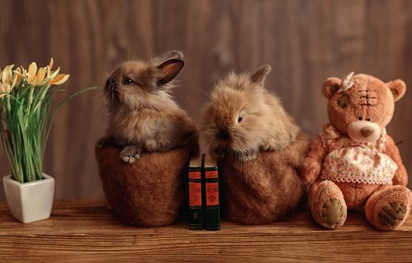 Картинка цветы, стол, игрушка, книги, кролик, медведь, мишка, пара, кролики, медвежонок, малыши, парочка, плюшевый, горшки, два, …