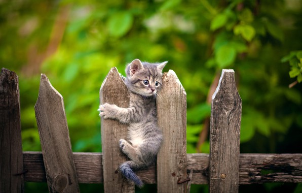 Картинка забор, малыш, котёнок, боке