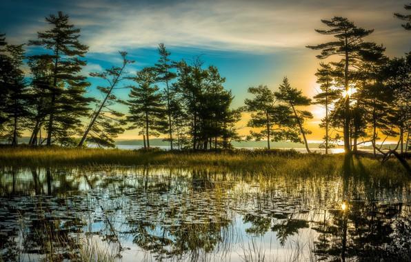Картинка вода, деревья, утро