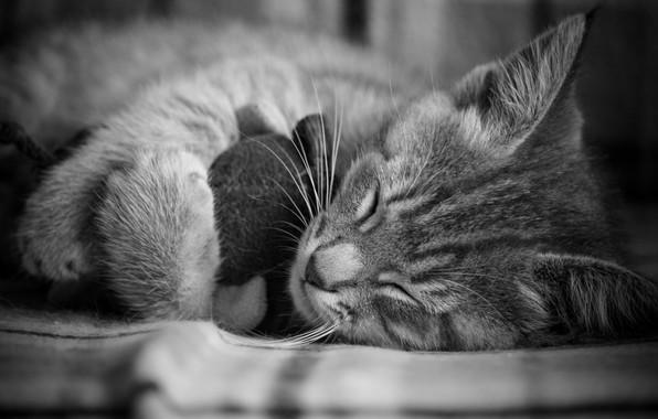 Картинка Cat, Kitten, Nice, Sleep