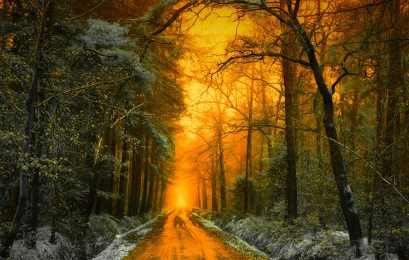 Картинка дорога, осень, лес, свет, снег, деревья, пейзаж, закат, природа, Голландия, Jan-Herman Visser