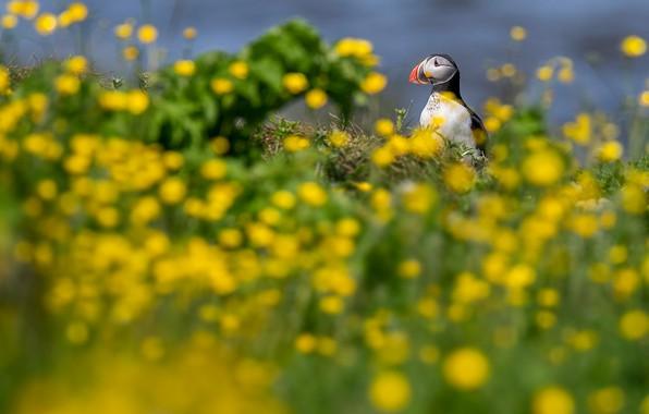 Картинка зелень, лето, небо, взгляд, цветы, природа, птица, поляна, желтые, луг, тупик