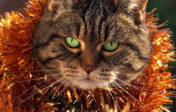 Картинка кот, морда, новый год, мишура