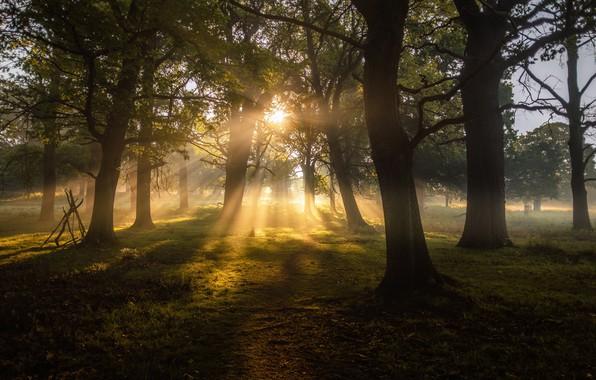 Картинка forest, trees, nature, landscapes, sun, fog, dawn, greenery, sunbeams