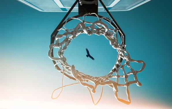 Картинка небо, птица, кольцо, щит, баскетбол