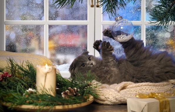 Картинка зима, кошка, кот, взгляд, ветки, поза, уют, дом, котенок, стол, серый, праздник, подарок, игра, свеча, …