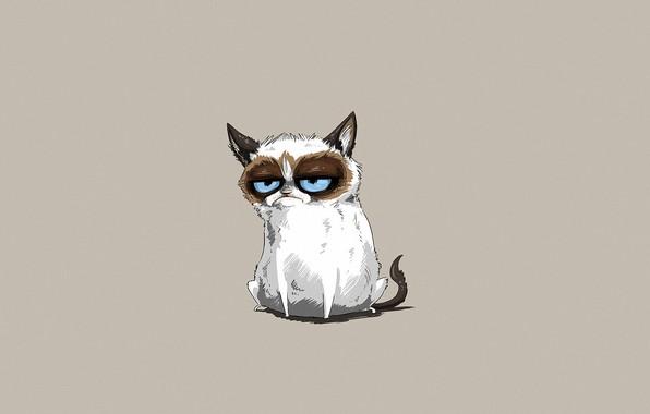 Картинка морда, серый фон, котяра, голубоглазый, злобный взгляд