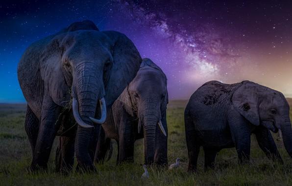 Картинка звезды, уши, млечный путь, слоны, хоботы