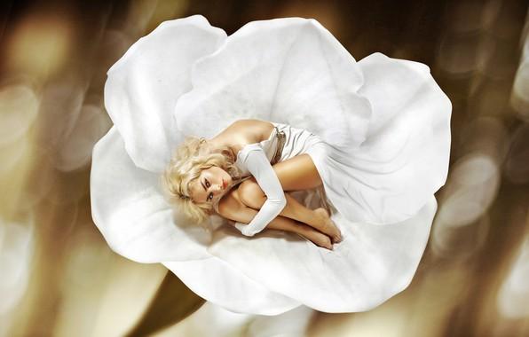 Картинка цветок, поза, фон, макияж, лепестки, платье, прическа, блондинка, лежит, красотка, в белом, боке, дюймовочка