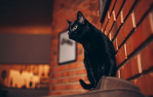 Картинка кошка, небо, кот, взгляд, морда, город, поза, дом, фон, стена, улица, черный, здание, вечер, рамка, …