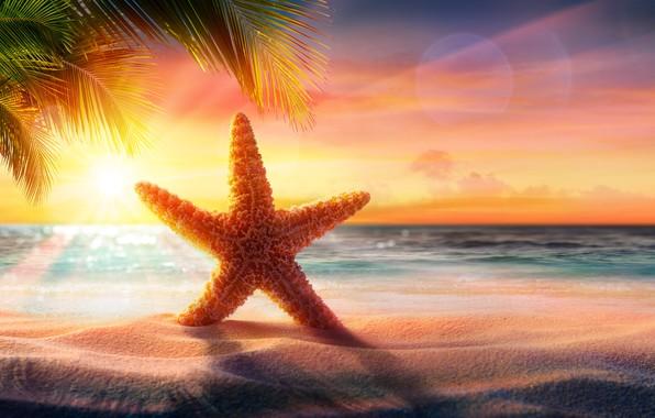 Картинка песок, море, пляж, звезда, beach, sea, sunset, sand, tropical, starfish