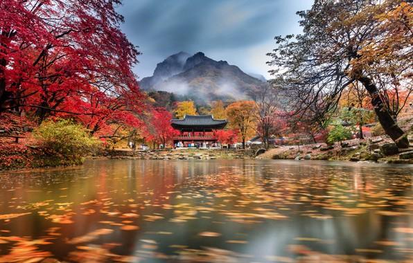 Картинка осень, облака, деревья, горы, туман, пруд, парк, храм, Южная Корея, Baegyangsa, Naejangsan
