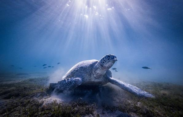 Картинка море, вода, свет, океан, черепаха, под водой