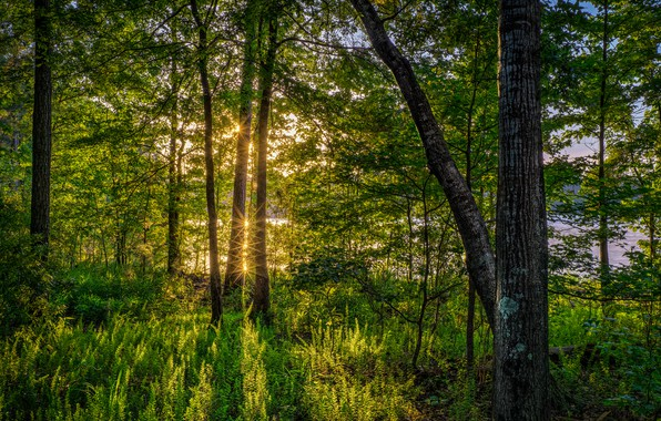 Картинка зелень, лес, лето, трава, солнце, деревья, река, Флорида, США