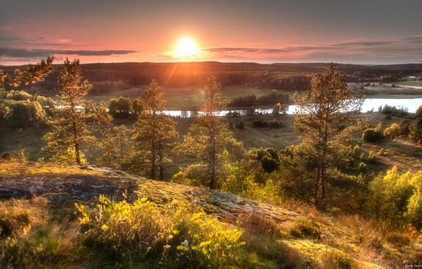Картинка лес, солнце, деревья, закат, природа, река, Столыпин Юрий