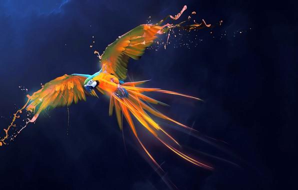 Картинка абстракция, фон, птица, краски, крылья, перья, арт, попугай, ара