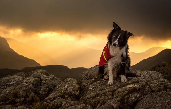 Картинка небо, взгляд, морда, свет, закат, горы, тучи, природа, поза, камни, фон, холмы, одежда, собака, вечер, …