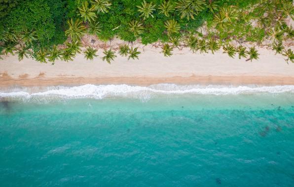 Картинка море, пляж, лето, природа, тропики, пальмы, берег, вид сверху