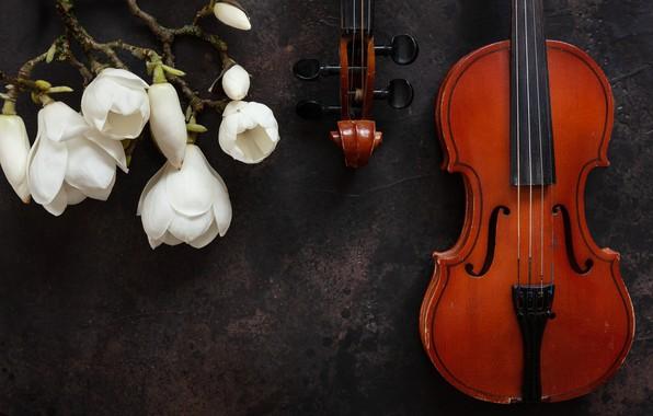 Картинка цветы, скрипка, магнолии