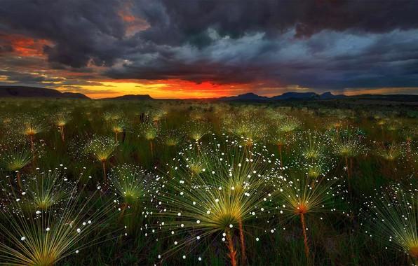 Картинка облака, тучи, растение, зарево, Бразилия, Шапада-дус-Веадейрус, пепалантус