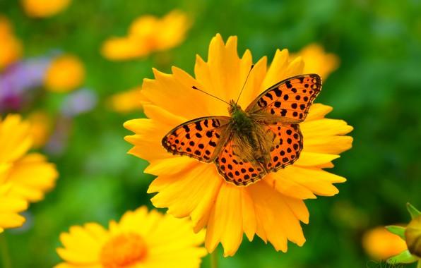 Картинка Макро, Весна, Бабочка, Цветочки, Flowers, Spring, Macro, Butterfly