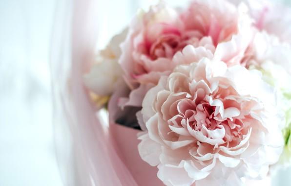 Картинка цветы, праздник, коробка, подарок, нежность, интерьер, букет, розовые, цветочки, пионы, гортензии, девушкам