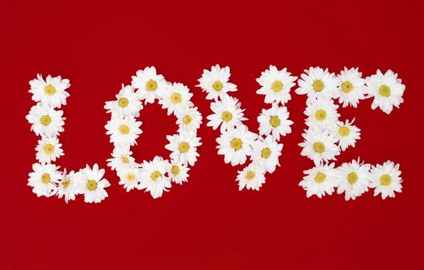 Картинка любовь, цветы, буквы, ромашки, love, flowers, romantic, camomile, floral