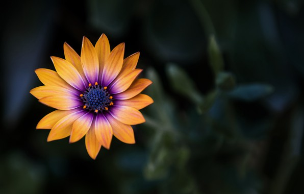 Картинка flower, close-up, yellow, flowers, macro, orange, blur, purple, 4k uhd background