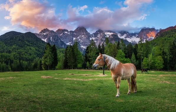 Картинка поле, лес, пейзаж, горы, природа, конь, лошадь, Альпы, Доломиты