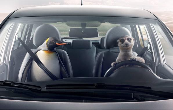 Картинка Volkswagen, Фольксваген, Сохранение дружбы, климат-контроль, Saving Friendships, Zone Temperature Control, Сурикат и Пингвин, Meerkat & …