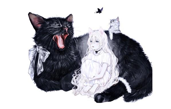 Картинка котенок, бабочка, босиком, хвост, белый фон, огромная, голубые глаза, бант, зевает, задумчивая девушка, чёрная кошка, …