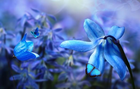 Картинка бабочки, цветы, природа, коллаж, digital art