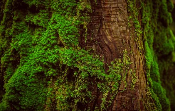 Картинка макро, дерево, мох, ствол, кора