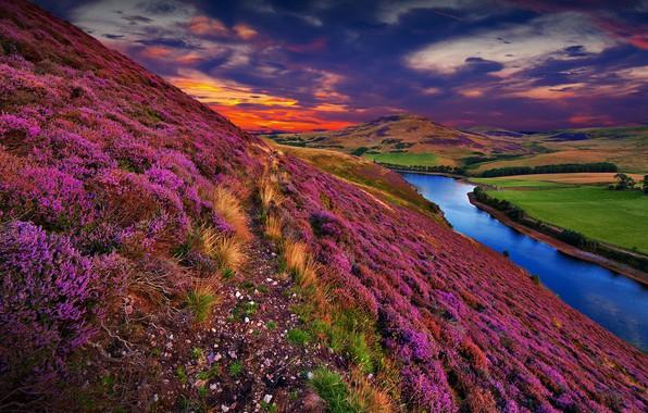 Картинка colorful, river, sky, trees, landscape, nature, sunset, flowers, clouds, hills, Scotland, United Kingdom, Pentland Hills