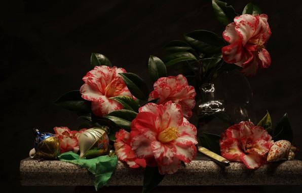 Картинка цветы, натюрморт, камелии