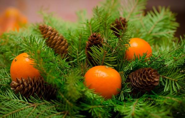 Картинка украшения, Новый Год, Рождество, Christmas, wood, fruit, New Year, мандарины, decoration, tangerine, Merry, fir tree, ...