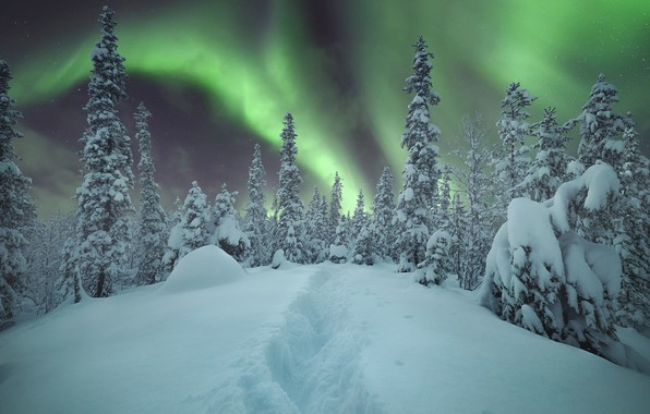 Картинка лес, небо, снег, деревья, сияние, Зима, Алексей Васильев
