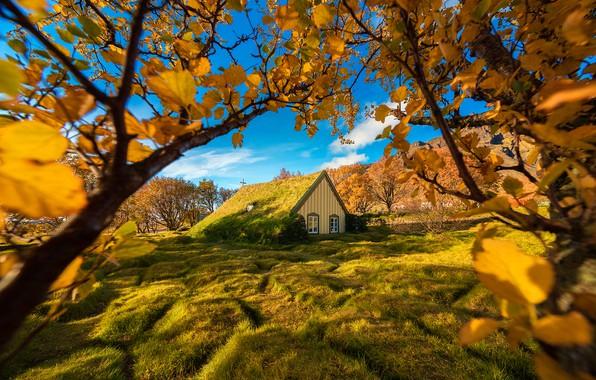 Картинка осень, деревья, ветки, Исландия, Iceland, Hof, Хоф, дерновая церковь, Turf Church