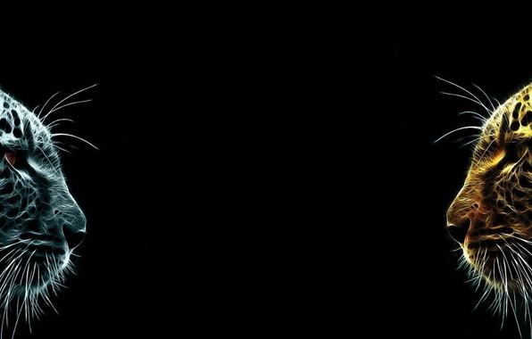 Картинка dual monitor, тёмный фон, Ягуары
