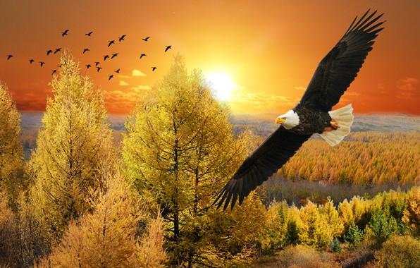 Картинка осень, лес, небо, взгляд, солнце, облака, деревья, полет, пейзаж, закат, птицы, природа, рендеринг, птица, вид, …
