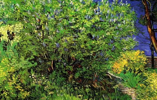 Картинка трава, куст, Vincent van Gogh, Lilacs