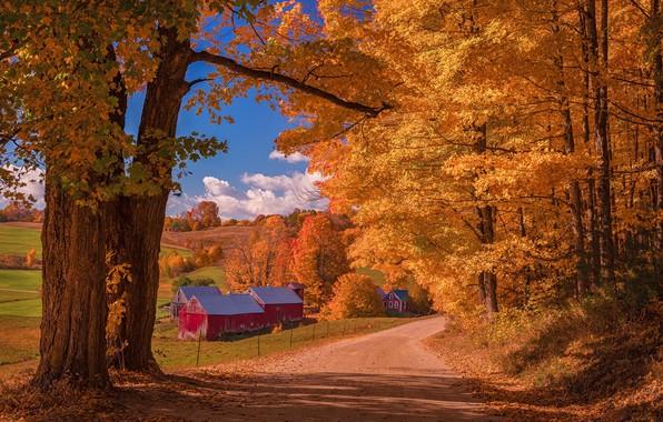 Картинка дорога, осень, лес, облака, свет, деревья, пейзаж, ветки, природа, дом, синева, стволы, листва, поля, оранжевая, …
