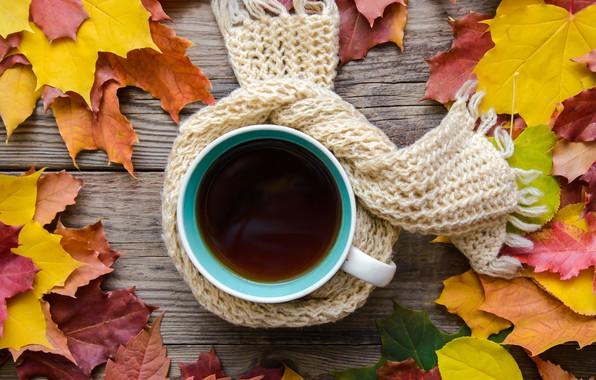 Картинка осень, листья, шарф, wood, autumn, leaves, coffee cup, чашка кофе